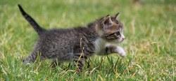 Identifier, enregistrer et stériliser son chat